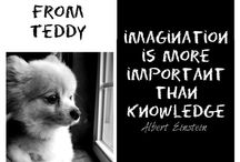 Teachings from Teddy / Wise words and inspiring quotes delivered by our Pomeranian, and dogloverstore.com mascot, Teddy