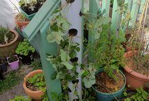 Planters & garden