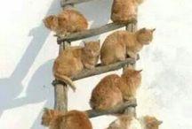 echelle de chats