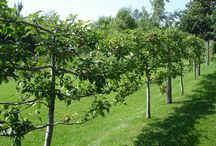 Fruit trees and garden / design and hydroponics.