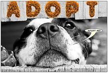 ADOPTION AWARENESS: ANIMALS