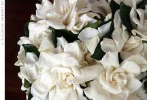 Wedding Flowers / by Stacy O'Neill