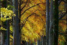 Baumalleen und Pflanzentunnel