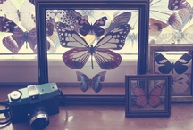 Home | BUTTERFLY by DNLLWRTL