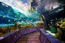 Home acquariums~
