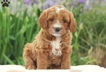 Puppy 101 / by Paula Campesi