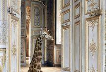 Animals / by Nancy Scott