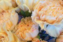 Blomsterliste nellik / Det finnes ca. 300 arter av nelliken og her har jeg bilder av grennellik og vanlig snittnellik. Akkurat som rosen er snittnelliken også en av de mest solgte og brukte blomsten i blomster butikken. Og alle nellikene symboliserer: Arroganse, mot, forfengelighet