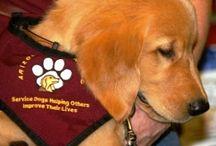 Service Dogs / Service Dogs