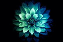 flowers flows