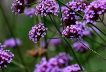 Srpnove kvetiny