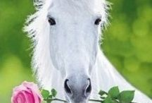 White horses / I love White horses and have always wanted one here are some dream horses
