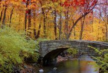 Fall / by Tina Marsh