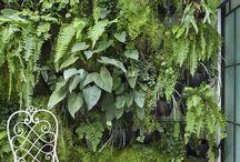 Muro verde / Plantas