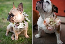 My Daisy's goin to b ring bearer,,, / Sooo sweet,,,,