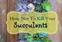 succulents DONT KILL