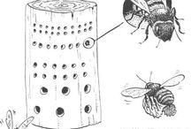 Nichoirs pour insectes