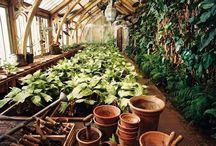 Greenhouse envy
