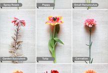 Flowers 101