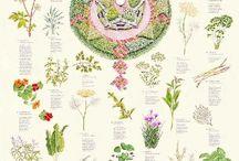 Ogrody ziołowe