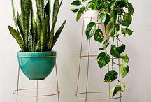 Plantas | Plants