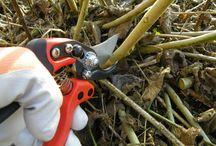Green Thumb Gardening Tips