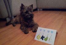 Hond / Speciaal bord voor Ukje, onze Cairn Terrier