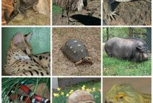Zoo Safari USA Rescues Unwanted Exotics / Rescue, Rehabilitate, Education and Conservation