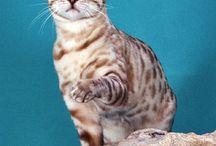 Cats & kittens / by Melissa Escher