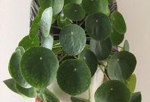 interesante plante