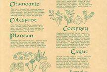 Herbs / by Kyla Kraft-Romain