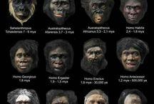 L'evolution