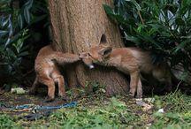 DIEREN / Leuke foto,s van dieren