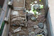 tartarughe  terraio / tartarughe