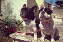 | Fashion Dogs | / Some of our friends with their new and fashion leashes and dogcollars ! :) Take a look
