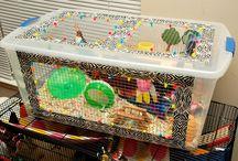 hamsters & guinea pigs