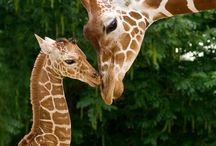 Beautiful Animals / by Cindy Rhoden