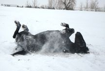 Horses in the Snow / Winter at CHR