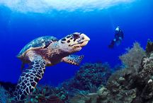 Underwater / Pictures