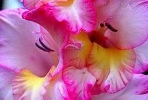 Flowers / Every girl wants them.     ⭐ MY BLOG: www.ditatime.weebly.com     ⭐ FB: www.facebook.com/DitaTime