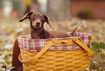 Photography Pets / Ideas for pet photography.
