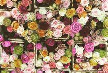 snijbloemen