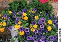 A garden of beautiful batch of flowers and garden homes / Arranging flowers? That's a good job