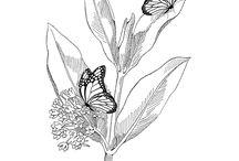 Teaching Resources, Butterflies