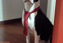 My Doggy!