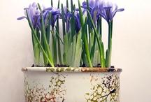 Jardines / Plantas