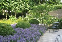 Herbaceous Border Cluny / Planting ideas
