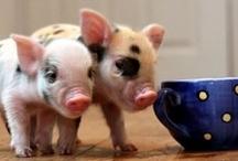cute pets / awwwwwww / by Chesley Nunnery