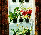 Flowers / by Kimberly Joyner