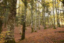 Bosques Mágicos: Tejera Negra / Un completo paseo por el Hayedo Tejera Negra
